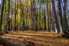 深深在五颜六色的秋天森林里在11月,布拉索夫,斯洛伐克 图库摄影