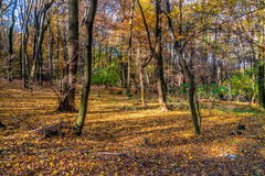 深深在五颜六色的秋天森林里在11月,布拉索夫,斯洛伐克 免版税库存图片
