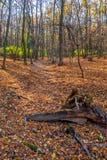 深深在五颜六色的秋天森林里在11月,布拉索夫,斯洛伐克 库存图片