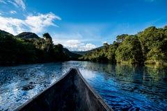 深深在亚马逊密林 库存图片