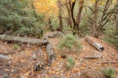 深深在树木繁茂区2 库存图片