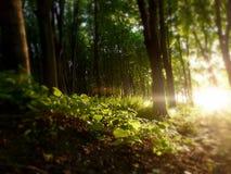 深深在森林里 免版税库存照片
