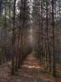 深深在森林里 库存照片