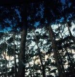 深深在灌木 免版税图库摄影