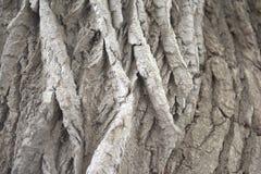 深深地具沟的树皮 库存照片