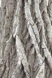 深深地具沟的树皮 免版税库存照片
