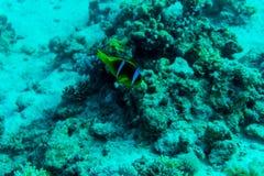深深海或海洋水下与珊瑚礁作为背景 免版税图库摄影