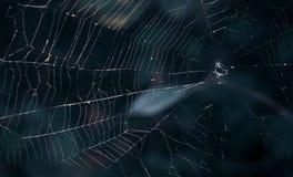 深深蜘蛛网在森林装饰的万圣夜 图库摄影