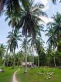 深深议院在棕榈树丛里 库存照片