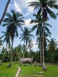 深深议院在棕榈树丛里 免版税图库摄影