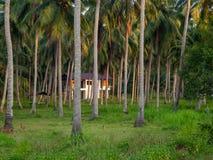 深深议院在棕榈树丛里 免版税库存图片
