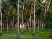 深深议院在棕榈树丛里 库存图片