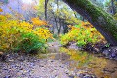 深深绕小河在森林里 免版税库存图片