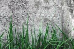 深灰粗糙的具体石墙纹理,绿草,水平的宏观特写镜头老年迈的被风化的详细自然土气 图库摄影