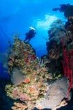 深热带珊瑚礁的技术潜水者 免版税库存图片