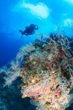 深热带珊瑚礁的技术潜水者 库存照片