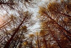 深秋天森林。 免版税库存图片