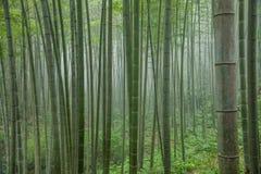 深竹森林在竹海域  库存照片