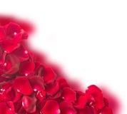 深红玫瑰花瓣框架  免版税图库摄影