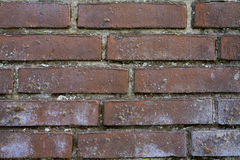 深红砖墙背景 库存图片