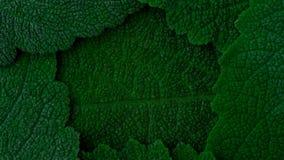 深绿叶子呼吸  二氧化碳, O2发行的吸收  光合作用 股票录像