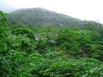 深绿色山雨 库存照片
