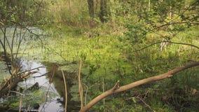 深绿色沼泽地 影视素材