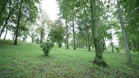 深绿色老结构树 影视素材