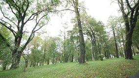 深绿色老结构树 股票视频