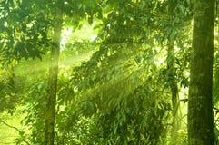 深绿色 图库摄影