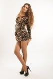 年轻深色的女孩时尚画象豹子礼服的 免版税图库摄影