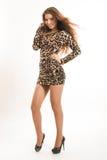 年轻深色的女孩时尚画象豹子礼服的 图库摄影