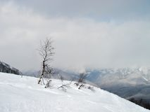 深雪 免版税库存照片