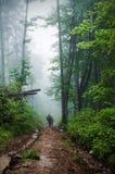深雾在森林里 免版税库存图片