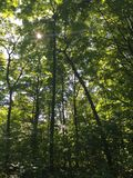 深刻的森林视图 免版税库存照片