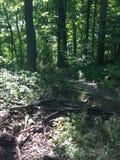 深刻的森林视图 免版税库存图片