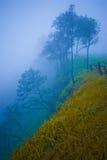 深刻的深渊和森林有雾的 免版税库存图片