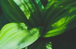 深绿色五颜六色的叶子特写镜头 照片描述宏观图o 库存照片