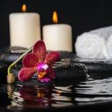 深紫色的兰花(兰花植物),禅宗石头的温泉概念 免版税库存照片