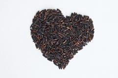 深紫色的米,被隔绝的Homnil米,泰国 免版税库存照片