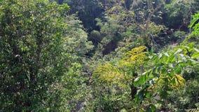 深绿色结构树 影视素材