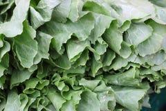 深绿莴苣叶子,农夫的市场 图库摄影
