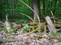 混乱在森林 库存图片