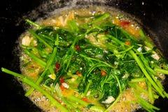 混乱油煎的牵牛花泰国食物样式 库存图片