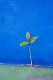 从混凝土墙的绿色树成长 库存照片