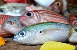 混合五颜六色的鲜鱼 免版税图库摄影