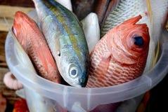 混合五颜六色的鲜鱼 库存图片