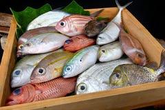 混合五颜六色的鲜鱼 免版税库存图片