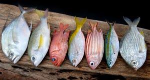 混合五颜六色的鲜鱼 免版税库存照片
