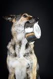 混合品种饥饿的狗和碗在黑暗的背景 库存图片